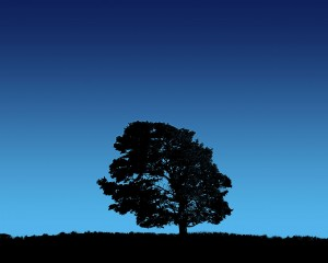 Tree-on-bluesky